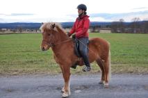 Frey från Björnforsen - Såld
