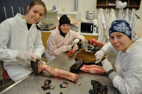 dissektion