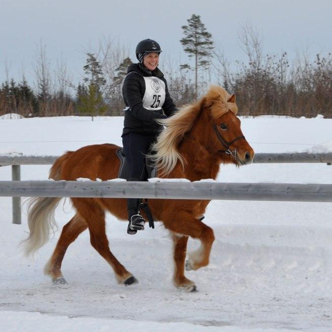 Vintertölt Dille 2013