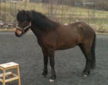 Freyr 2013