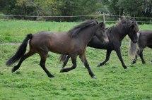 Freyr och Garpur i takt