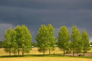 Vackra träd i lägdkanten.