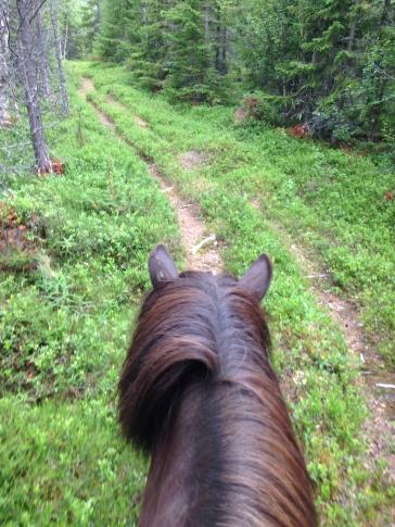 Ridning i skog och mark