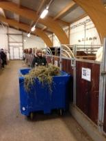 Hästarna fodras med hjälp av en stor vagn.
