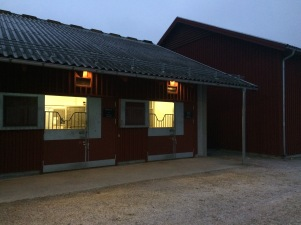 Västra stallet i Kungs, uteboxar med skötargång i mitten.